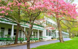 Pink Budded Trees infront of Capon Springs and Farms main building